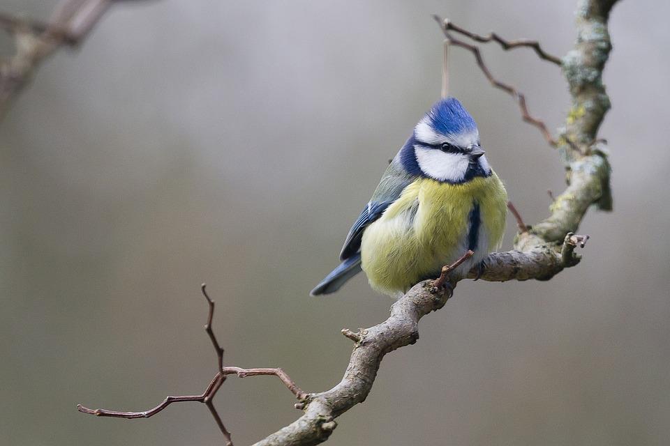 """Projekt """"Bedrohte Vogelwelt"""""""