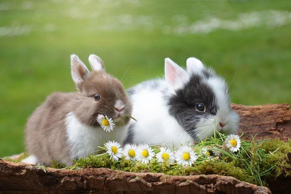 Wie man Kaninchen richtig hält